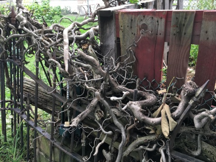 Chiplis fence.JPG